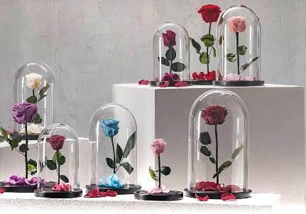 Розы разных размеров
