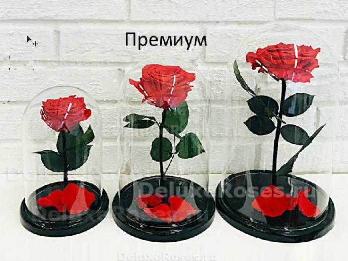 Роза Премиум в сравнении с другими размерами
