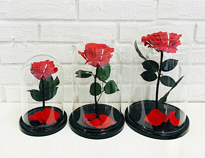 Размеры роз (мини, премиум, кинг)