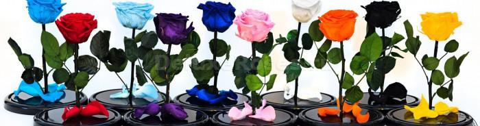 Розы разных цветов без колбы